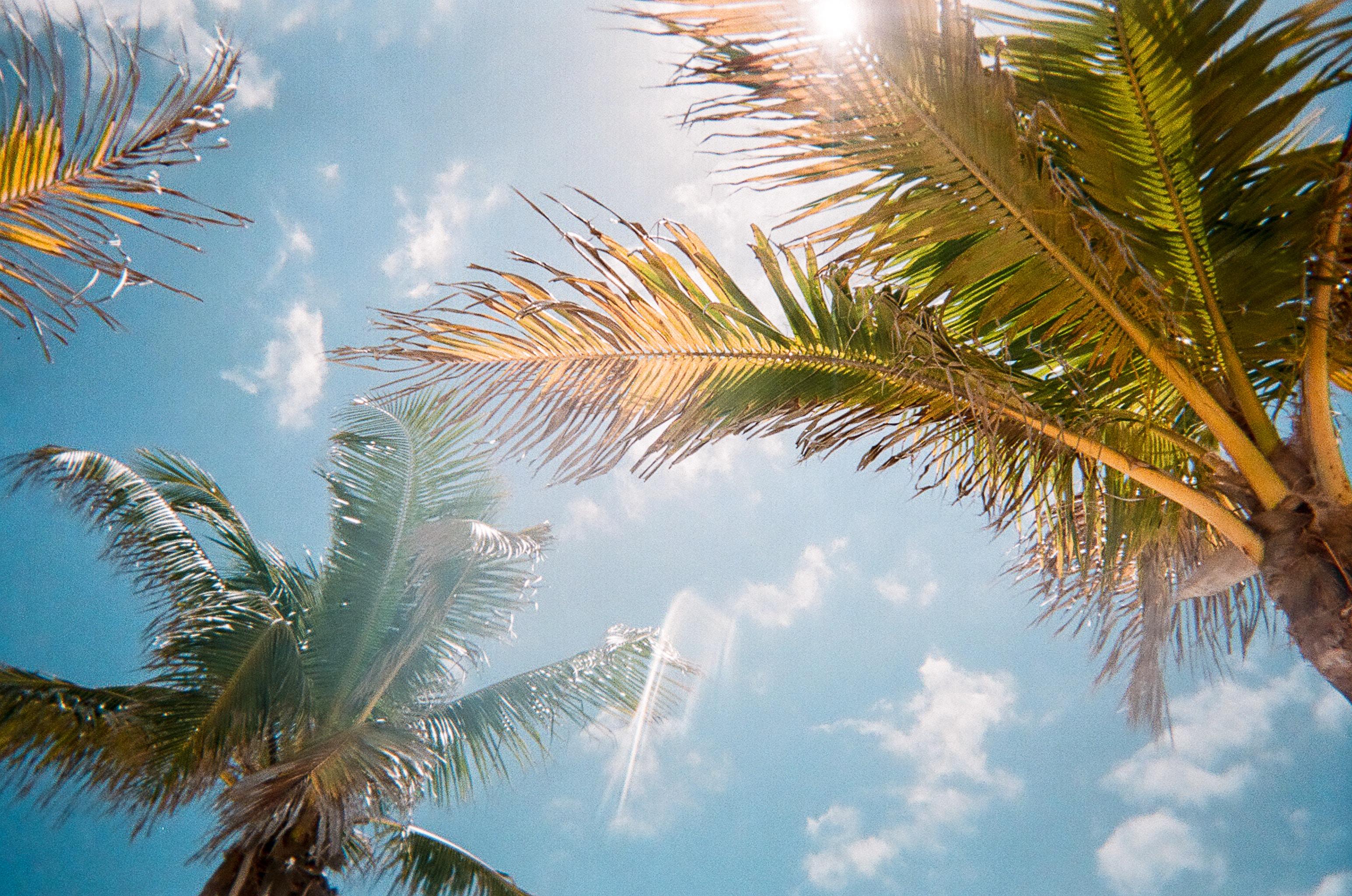 Florida Sunshine Through The Palm Trees