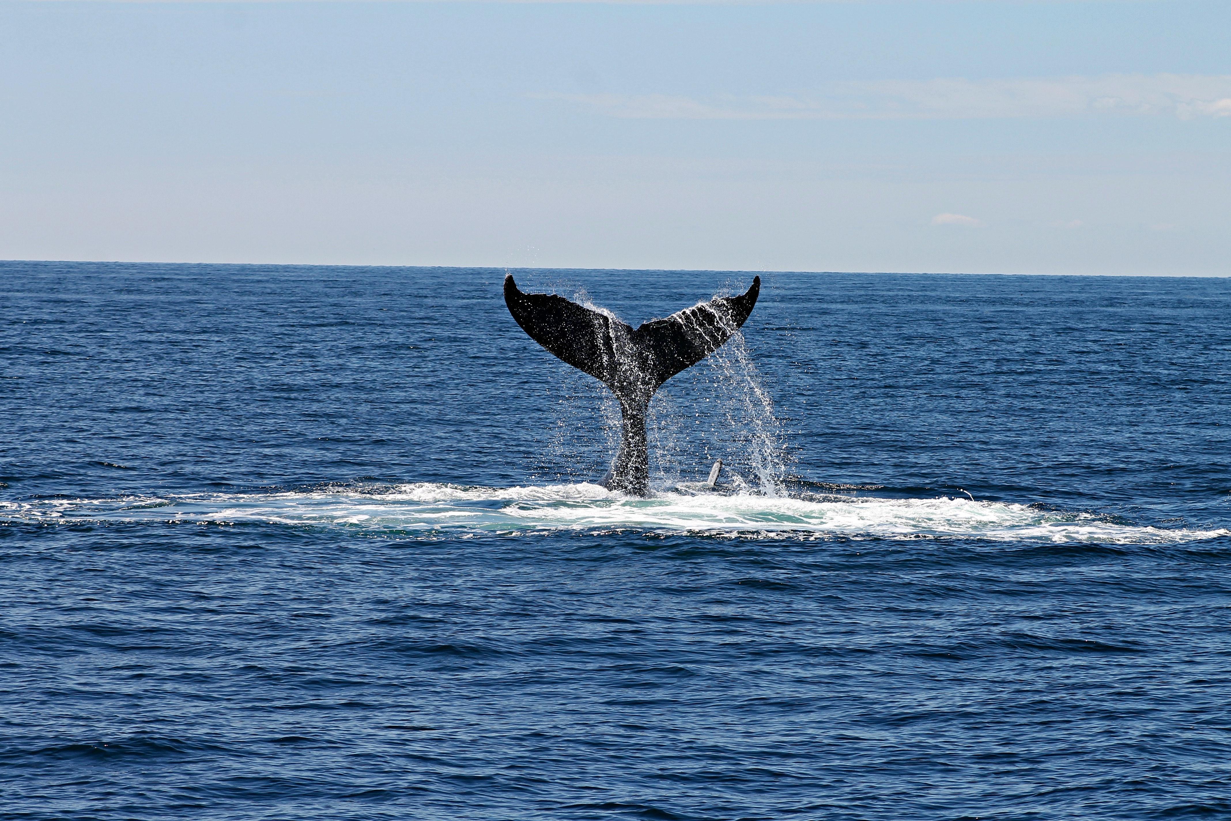 Whale Tail in Deep Ocean